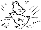 14911079 - a black and white version of two small chirping chicks